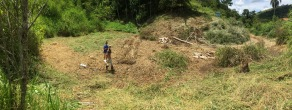 Clearing a plot to begin planting Açai.