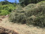 Bamboo that was cut down to clear space for Açai, that will now become compost.